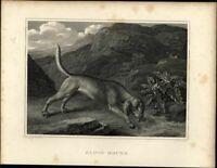 Blood Hound Dog image c 1820 fine antique engraved print