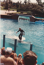 KILLER WHALE RIDE Vintage FOUND PHOTOGRAPH Color FREE SHIPPING Original 7323