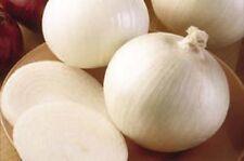 Onion White Sweet Spanish Great Heirloom Vegetable 700 Seeds