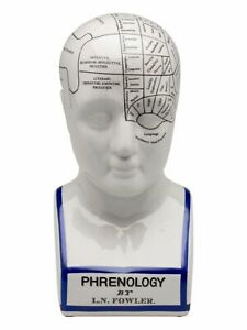Phrenology head with bust - brain acc. to fowler - light porcelain Fowler