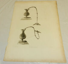 """1808 Antique Botanical Print/EXPERIMENT TO GROW FLOWERS UPSIDE DOWN/13x19"""""""
