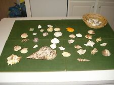 SEA SHELL COLLECTION FOR SALE