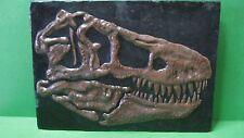 Tyrannosaurus' Skull Expedition Dinosaur Excavation Kit - Fossil, Booklet, Tools