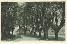 Piskowitz bei Kamenz, Baum, Bäume, Lindenallee, Ansichtskarte um 1930