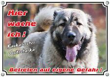 Hundeschild Kaukasischer Owtscharka