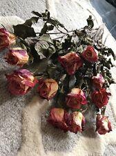 Dried Roses Total 12 Long Stem Vibrant Colors Peach/Cream/Purple