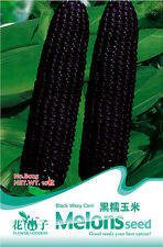 1 Pack 10 Black Waxy Corn Seeds Maize Zea Mays Organic B025