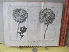 Vintage Print,SEMI DOUBLE RANUNEULUS,Spectacle de la Nature,1736,Tree