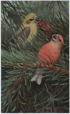 C4034 Crocere delle Pinete - Stampa d'epoca - 1929 Vintage print
