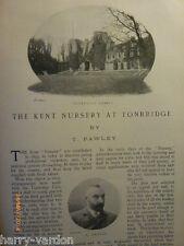 Kent Cricket Nursery Tonbridge Cricket Club Week Antique Old Photo Article 1904