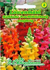 Löwenmaul 5000 Samen Blume Regenbogen Mischung
