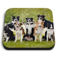 Square MDF Magnets - Border Collie Dogs Black Brown Mix  #21377