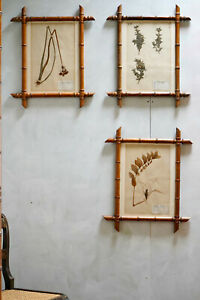 Antique 19th Century French Flower Pressings Herbarium In Faux Bambo Frames