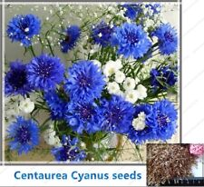 100pcs/bag Cornflower (Centaurea Cyanus) Seeds Blue Centaurea cyanus Flower Seed