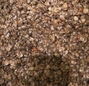 Fresh IRU EKITI 400g LOCUST BEANS/UGBA/DAWADAWA