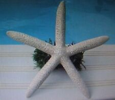 WHITE STARFISH (real) Christmas Tree Topper 7""