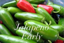 HOT CHILLI PEPPER - JALAPENO EARLY - 20 SEEDS