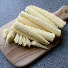 Vegetable - Sweet Corn - Mini Pop - 50 Seeds