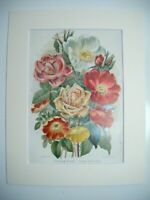 Antique c1880 Chromolithograph Botanical Floral Print in Mount - CLIMBING ROSES