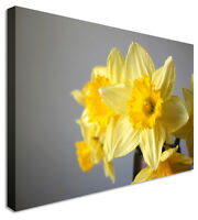 Daffodil Bunch - Floral Flower Canvas Wall Art Picture Print