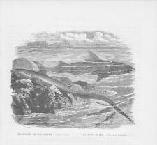 Fuchshai Alopias vulpinus Riffhai Haie HOLZSTICH von 1863 Thresher shark Reef