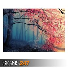 FOREST FALL COLORS (AE035) NATURE POSTER - Photo Poster Print Art A0 A1 A2 A3 A4