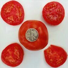 Earliana - Organic Heirloom Tomato Seeds - Very Early - 40 Seeds