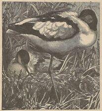 A3595 Monachina - Incisione - Stampa Antica del 1890