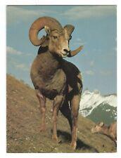 Vintage Sierra Club BIGHORN RAM Blank Greeting Card w/ Envelope Banff Canada G6