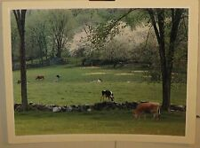 Vintage 1959 DANIEL FARBER 'Cows and Blossoms' New England FARM Photograph