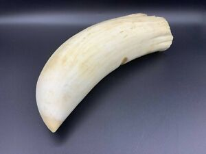 whale tooth? made plastic, copy 20 cm