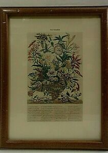 VTG ROBERT FURBUR BOTANICAL ART PRINT - SEPTEMBER - 12 Months of Flowers - 1730