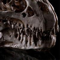 Tyrannosaurus Rex Skull Fossil Dinosaur Model T-Rex Animal Collector Decor Toy