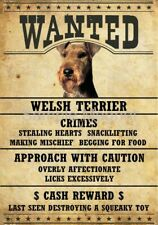 "Welsh Terrier Wanted Poster Fridge Dog Magnet Large 3.5"" X 5"" #2"
