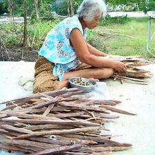 1000 Seeds Organic Moringa Seed Plants Tree Benefits Growing Herb Side Thai Herb
