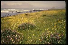 048070 Coastal Wildflowers Mendocino A4 Photo Print