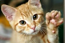 Cat & Kittens FLEA TICK CONTROL medicine protection 100 dose treatment free ship