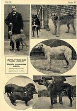 Preisgekrönte Hunde (Dackel - Dogge - Slugis) Hundefreunde Hektor Berlin c.1906
