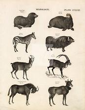 Mammals Antelope Ibex Ox Zebra Seal Nye Chau - 1818 Antique Print #D843