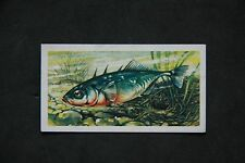 UK Issue Fish/Sea Collectable Tea Cards