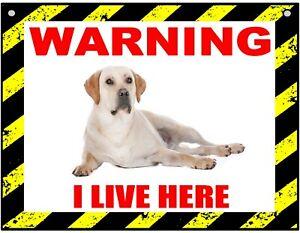 Warning I Live Here - Labrador - Dog - Metal Sign For Indoor or Outdoor