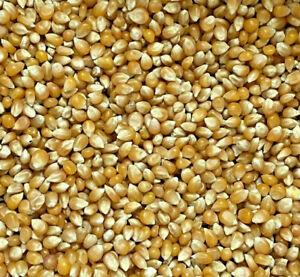 Popcorn Mais 5 kg Sack Mais Maiskörner feinste Qualität GMO frei