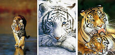 Set of 3 Original Large 35x23 inch Tiger Endangered Animal Poster Prints