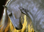 BEAUTIFUL GREY HORSE * QUALITY CANVAS ART PRINT