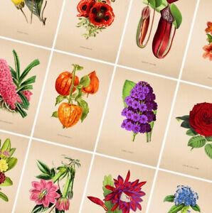 Vintage Floral Prints - Botanical Posters - Flower Wall Art - Home Decor - Gift