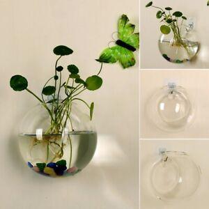 transparent glass vase wall hanging terrarium fish tanks potted plant Flower pot