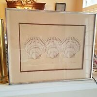 "Shell Lithograph Signed 123/500 ""Calicos"" Beach Sand Scallops"