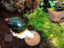 Snail Mix, Land Snail Food, Pet Snail Food, Multiple Flavours, Original