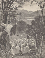 COLLIE DOG HERDING SHEEP FLOCK SHEPHERD BOY ANTIQUE PRINT 1889