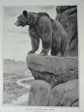 """Philip R. Goodwin, 1903 Grizzly Bear Print 11"""" x 16"""", Stunning Image"""